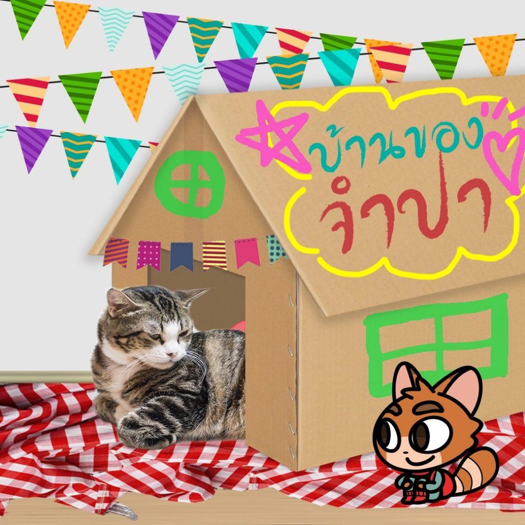 D.I.Y.บ้านแมว